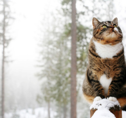 Preview 037 great atmosphere cat winter funny
